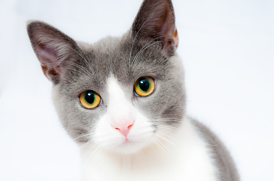 Činjenice o mačkama koje niste znali