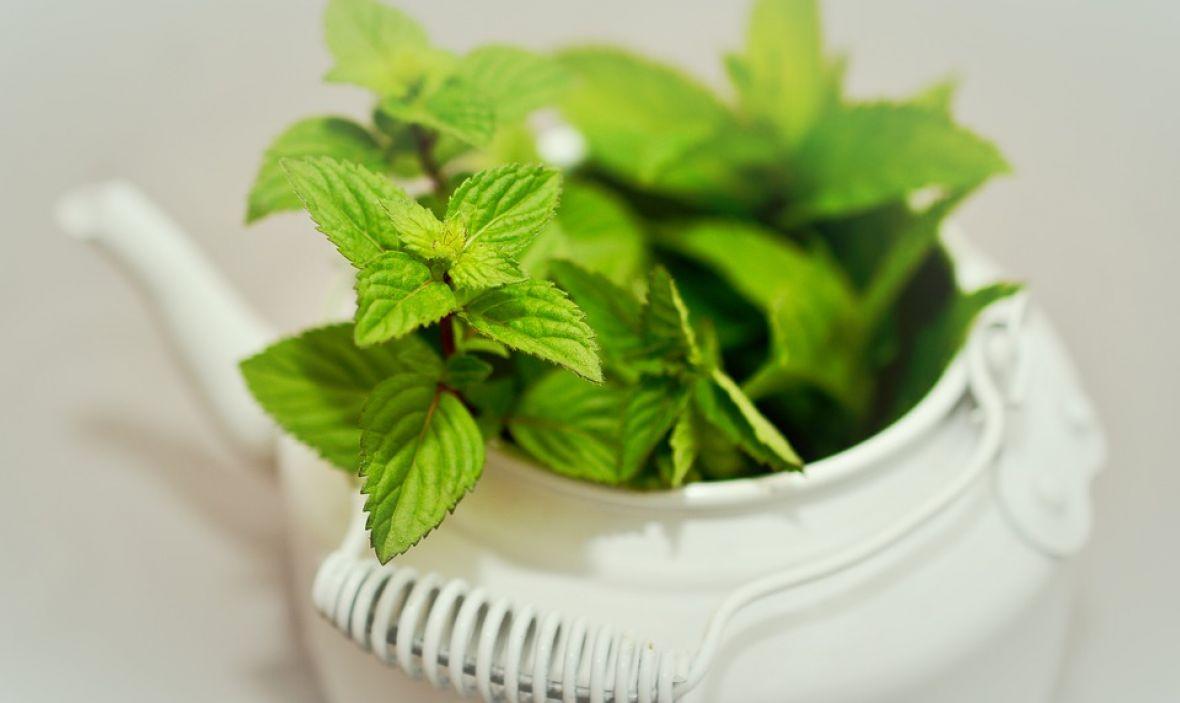 Čarobna biljka: Tjera komarce, uši i mrave, a neizbježna je i u kuhinji