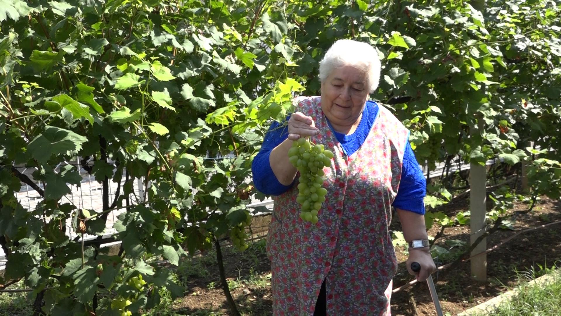 U svome vrtu uzgajaju vinovu lozu i egzotične biljke