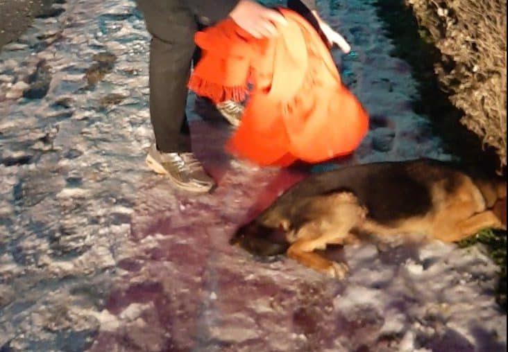 Usred Sanskog Mosta upucan pas