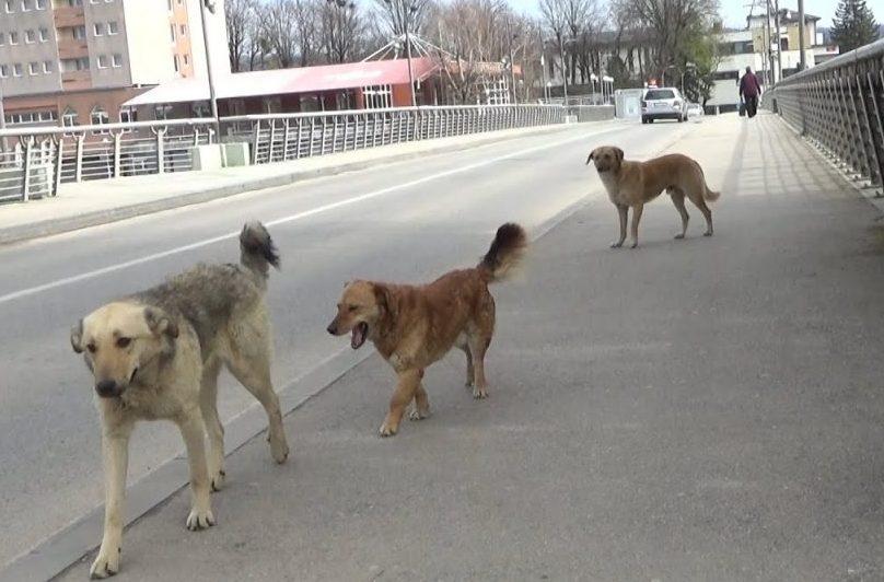 Koriste situaciju: Životinje lutaju ulicama