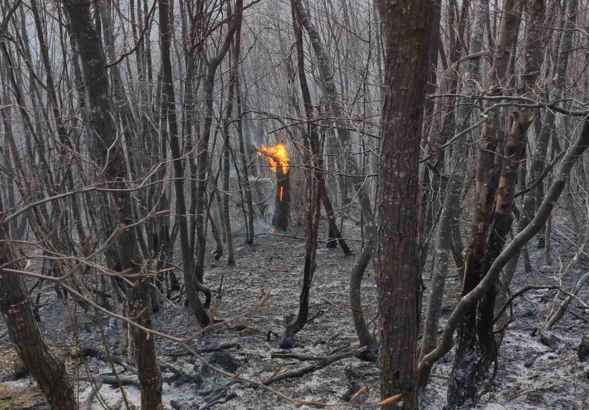 Hrabri sanski vatrogasci spriječili širenje požara