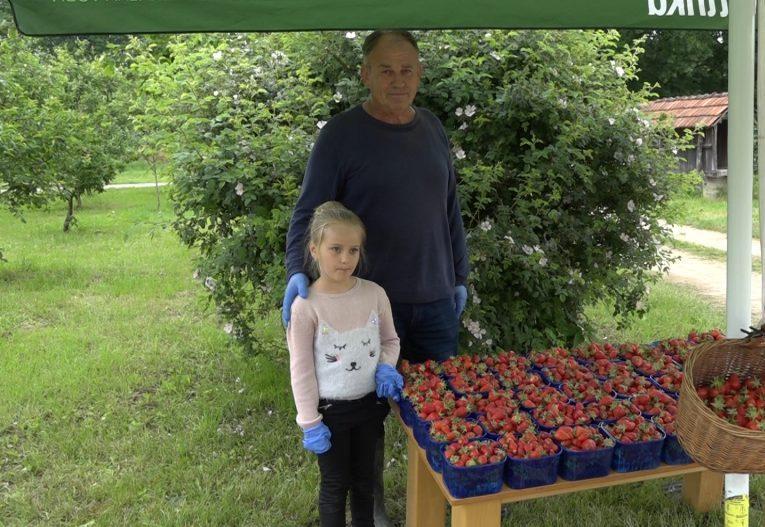 Sočne i ukusne jagode rodile, nema ko da ih bere