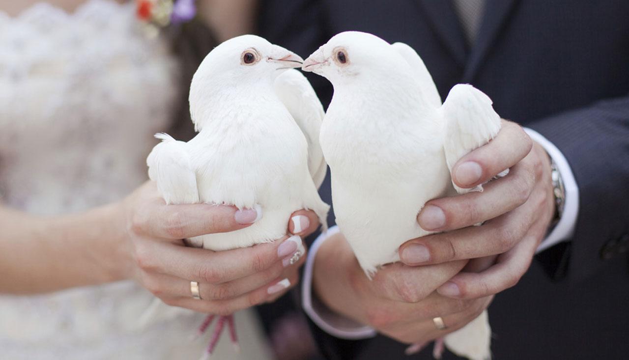 Bijeli golubovi za vjenčanja  iz Sanskog Mosta