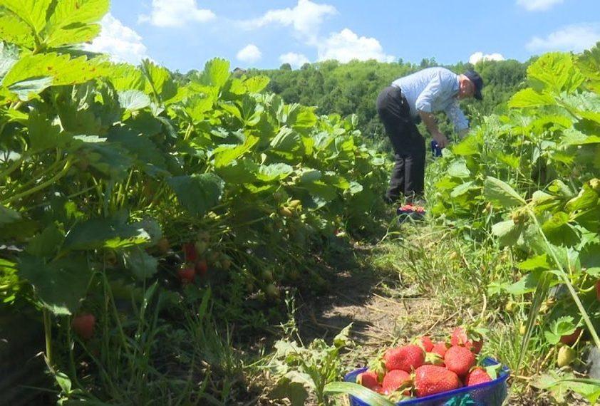 Ibrahim Aganović: U poljoprivredi treba zasukati rukave