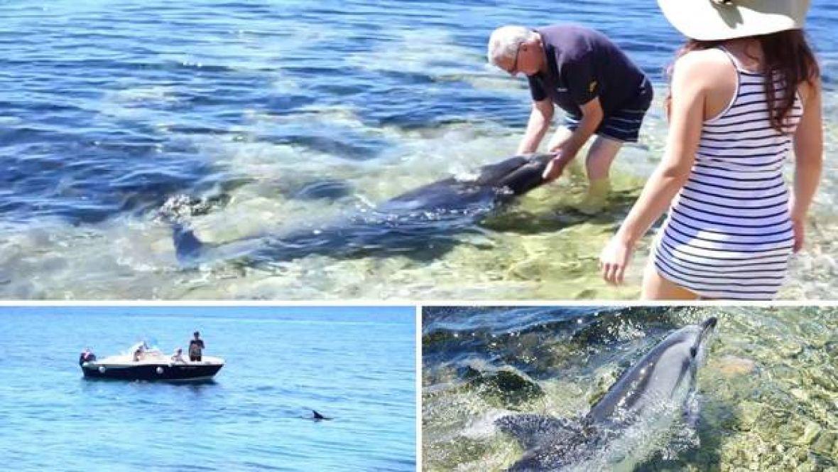 Prelijep video s Jadrana: Kada delfin dođe u plićak i hoće da se mazi…