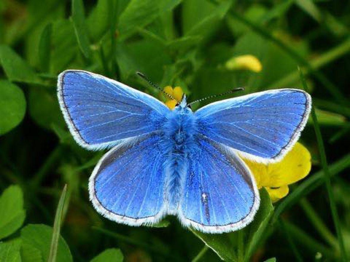 Znate li strašnu priču o plavom leptiru