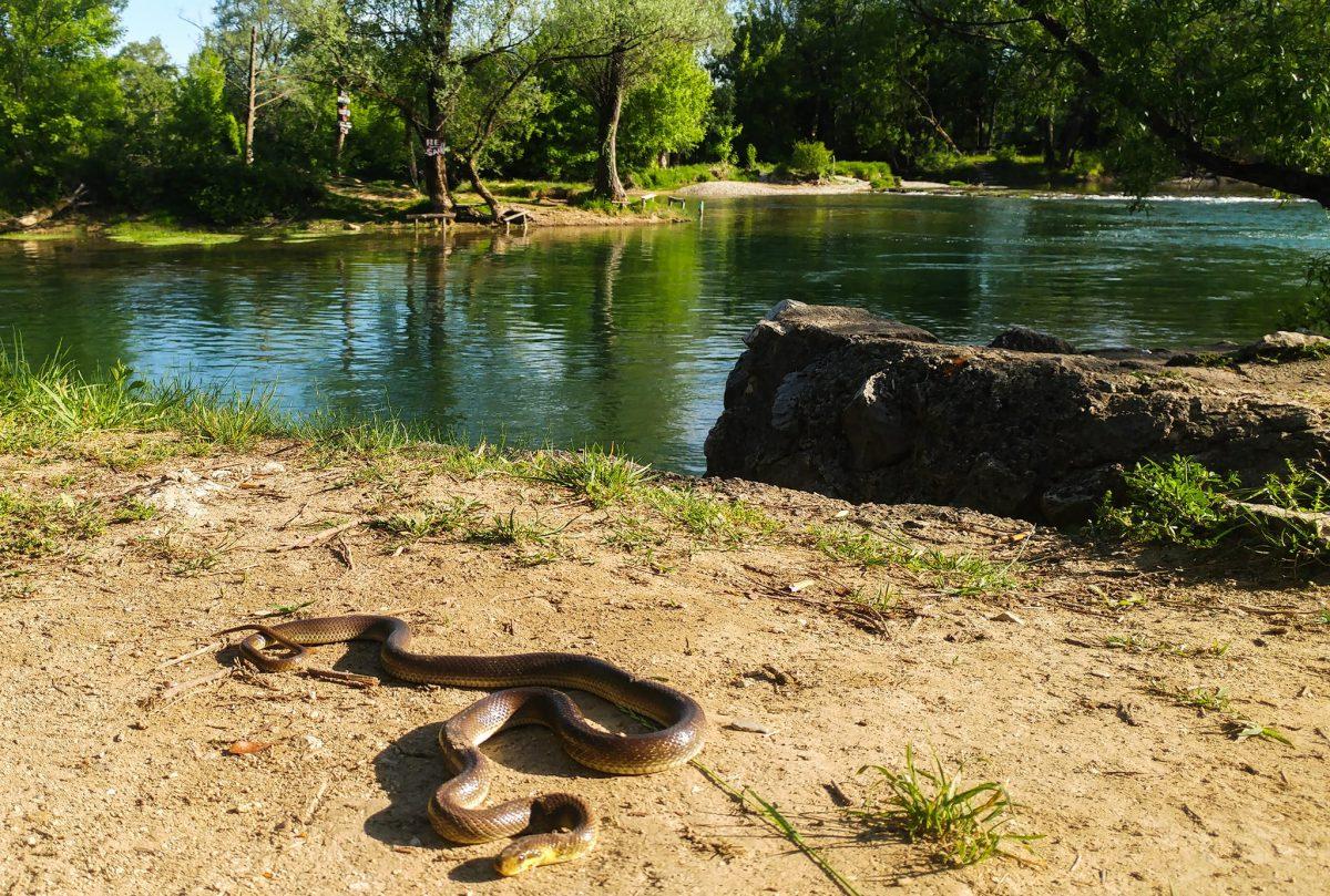 Vrijeme je zmija: Bh. stručnjaci ukazali kako se zaštititi i šta ako vas ujede