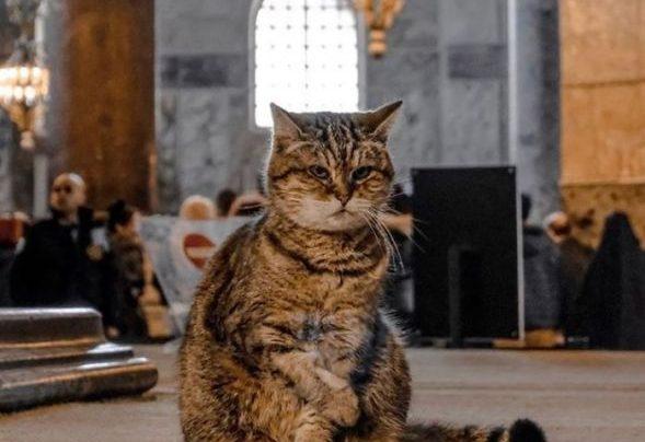Pogledajte kako mačka pomoću znakovnog jezika moli vlasnika za hranu