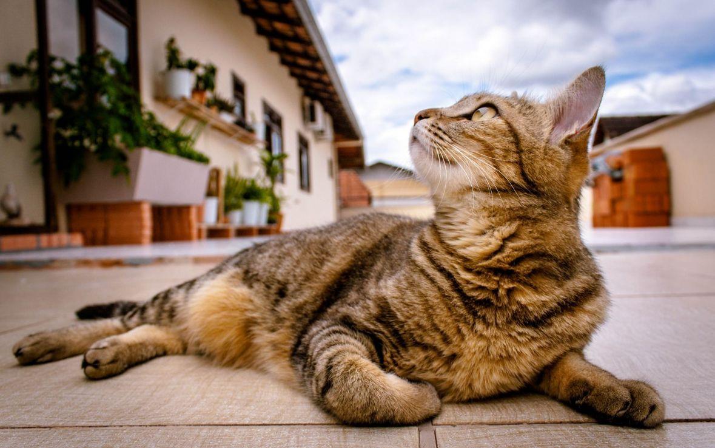 Zašto mačke prate svoje vlasnike, čak i u toalet?