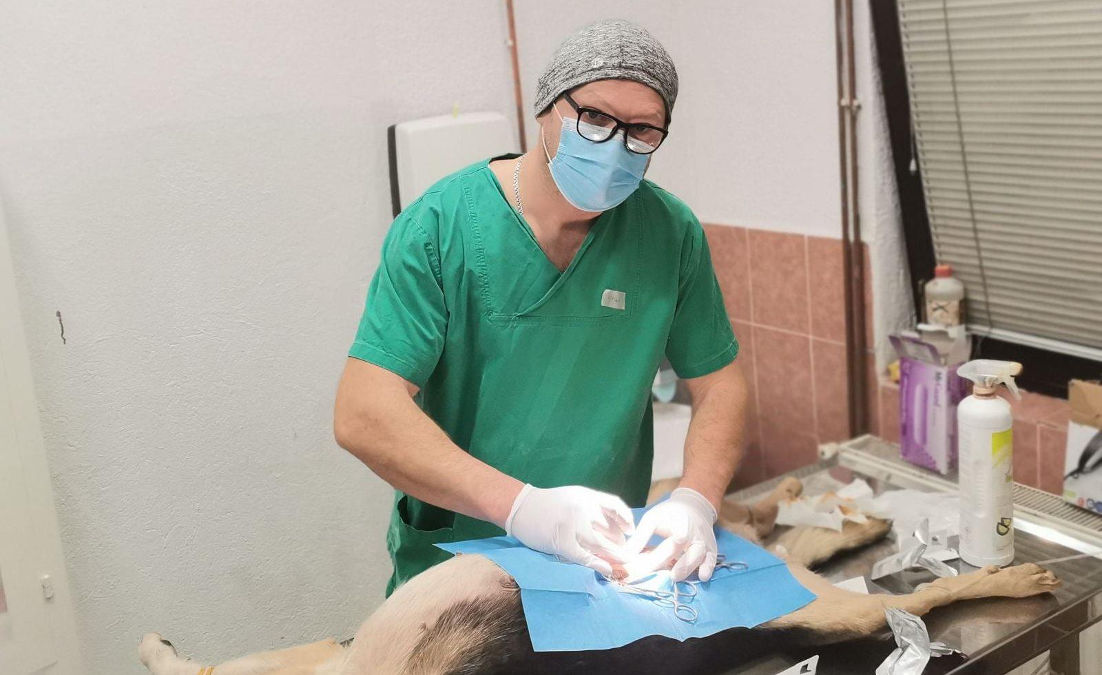 BRAVO Sanski veterinari odstranili tumor kod psa