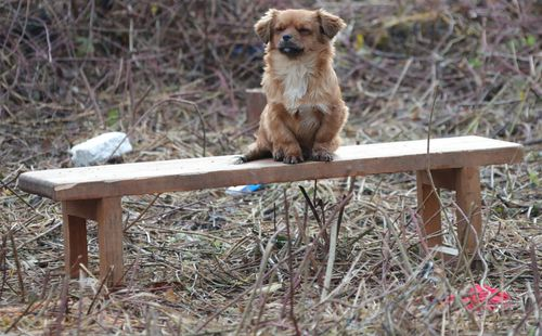 Psić čuva kuću poginulog čovjeka i čeka
