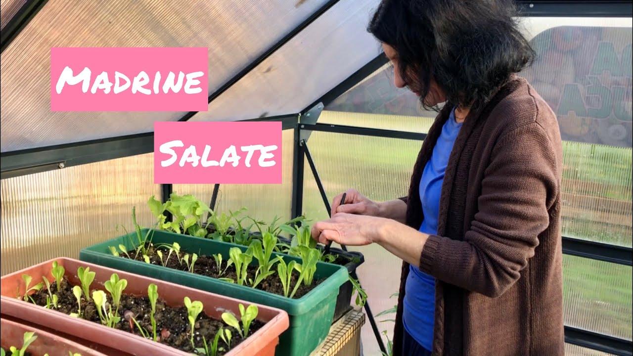 Madrine omiljene salate