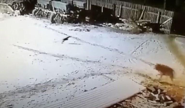 Farmer golim rukama zadavio vuka koji mu je ubio dva psa i napao konja