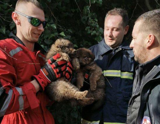 Lijepa priča: Dobri ljudi uložili ogromne napore da iz surovih uslova spase psiće