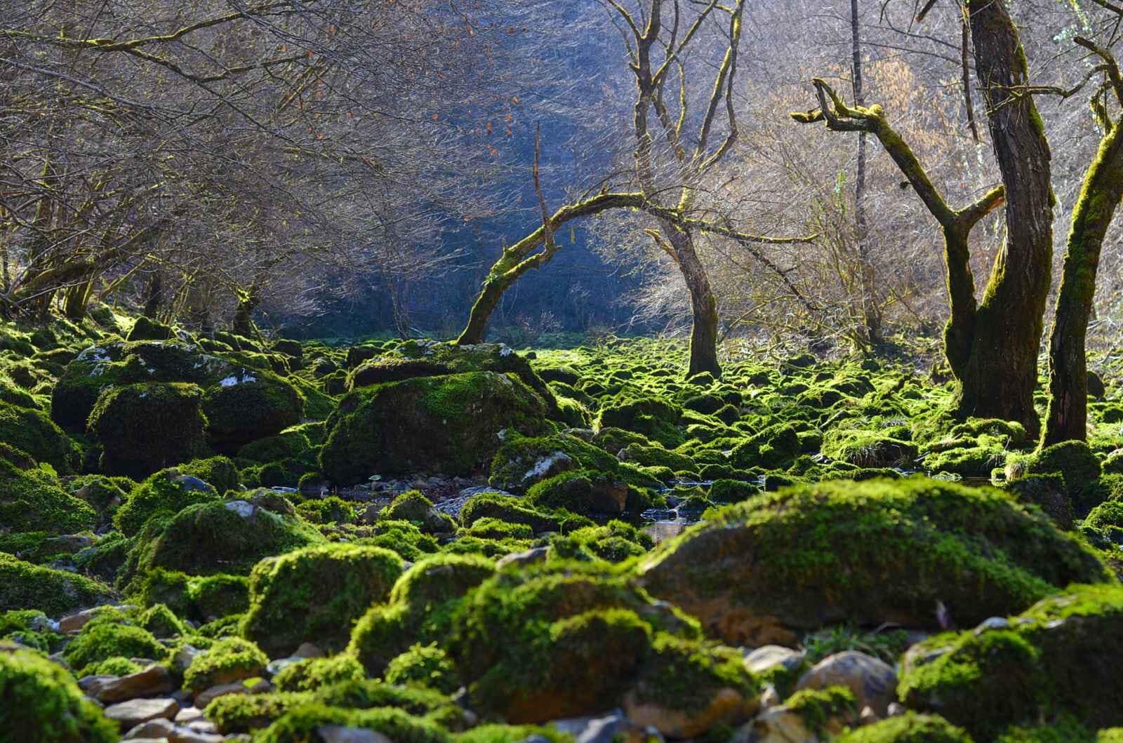Savršene fotografije prirode koja nas okružuje