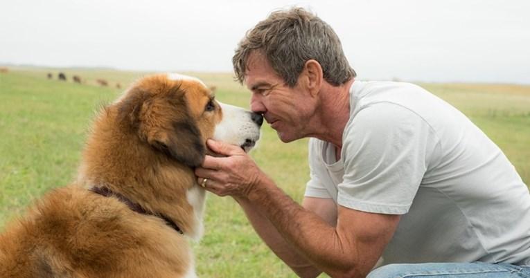Pet filmova o psima koji nikoga neće ostaviti ravnodušnim
