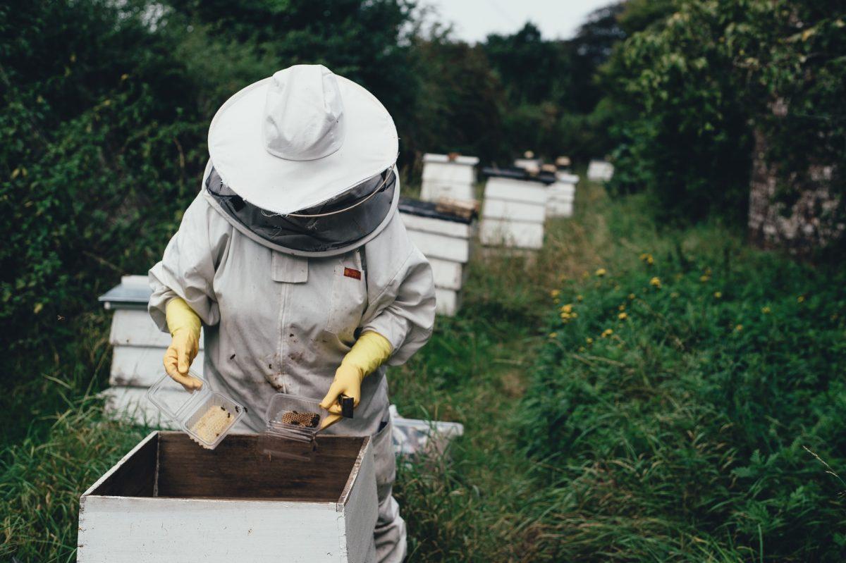 Nevjerovatna svojstva meda: Omogućava zaštitu našeg imunološkog sistema