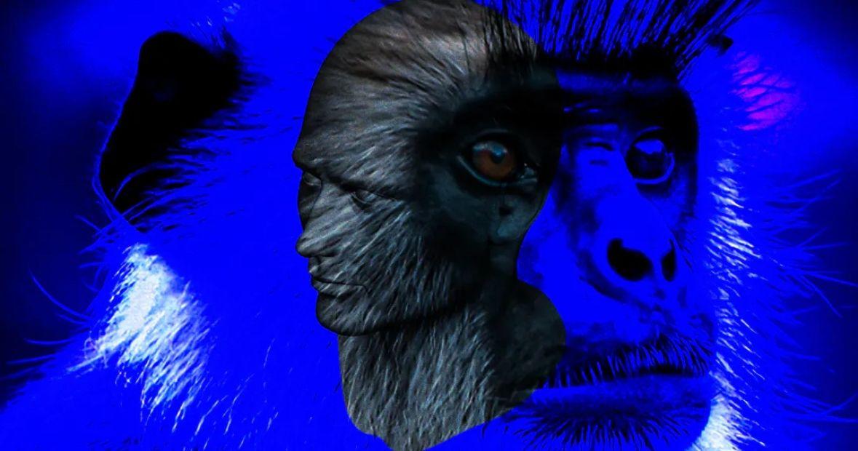 Potvrđeno je: Naučnici uspjeli stvoriti hibrida čovjeka i majmuna
