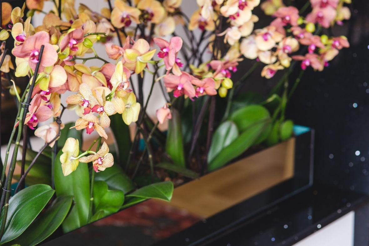 Pomoću ovog recepta vaša orhideja će trajati duže