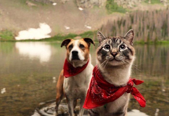 Ovaj duo mačke i psa je nešto najslađe što ćete vidjeti danas!