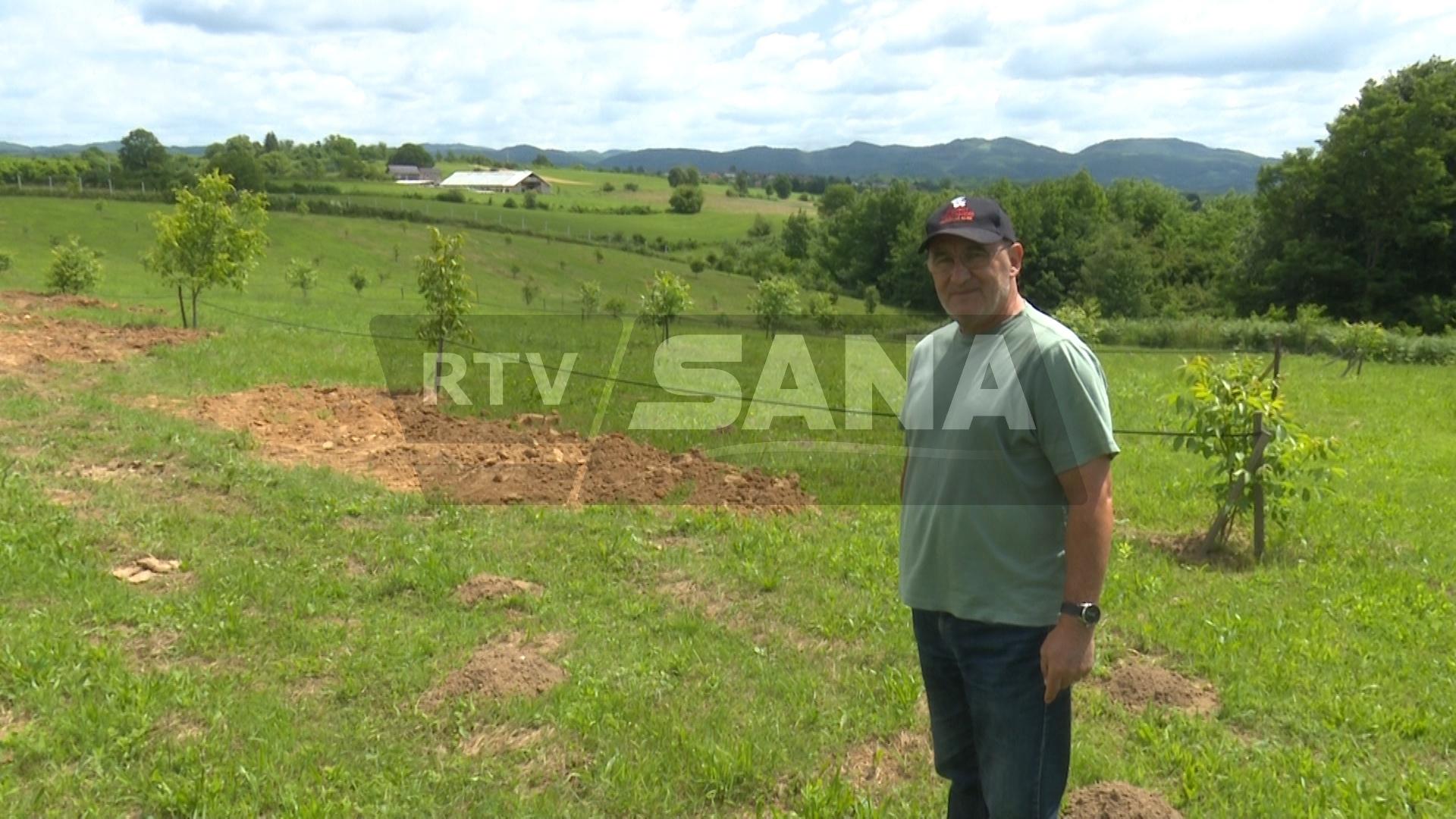Poslije 27 godina u Americi, vratio se i zasadio plantažu voća u Čaplju