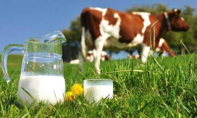 Znate li koje su blagodati mlijeka