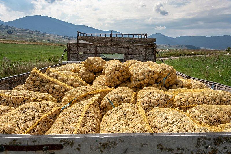 U BiH zabranjen uvoz 22 tone krompira iz Italije, otkriven štetni organizam
