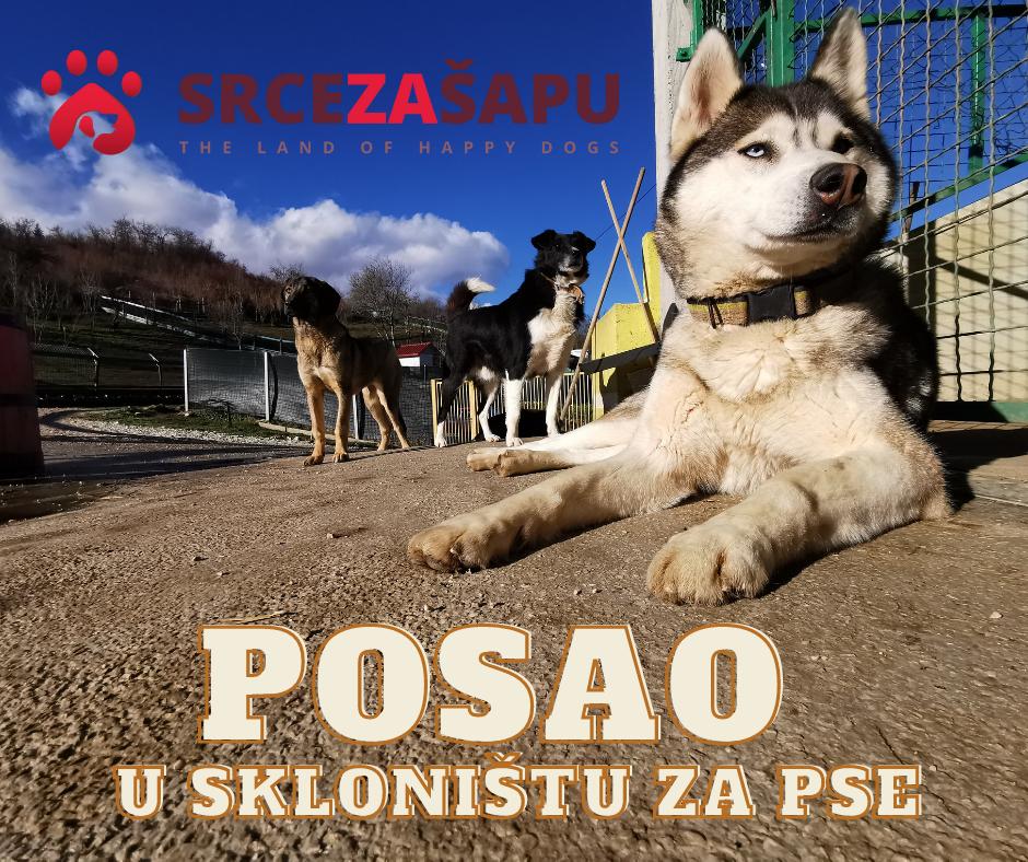Konkurs za posao u skloništu za pse